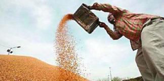 Wheat Procurement in Haryana