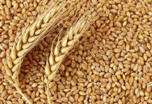 Wheat in Grain Markets