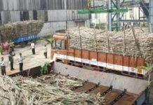 cooperative sugar mills in Haryana