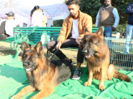 Dog Show Organized at Science City