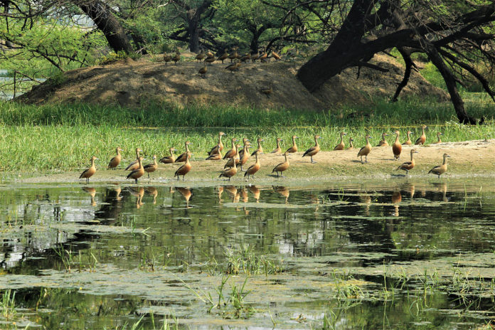 Bird festival celebrated in Pong lake wild life sanctuary