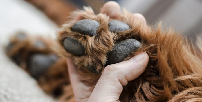how-to-clean-a-dogs-paws-at-home
